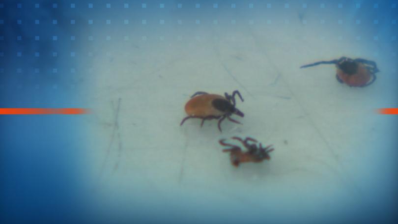 Кърлежите и насекомите през лятото