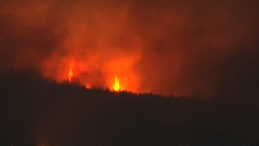 Forest fire raging in the area of Svilengrad