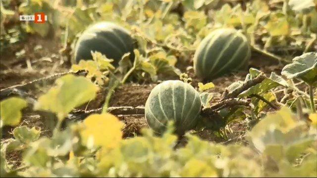 Биоземеделие - фамилно земеделско стопанство от Панагюрище