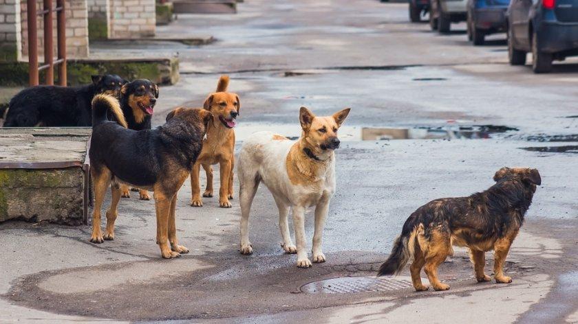 Цял квартал страда от агресивни безстопанствени кучета