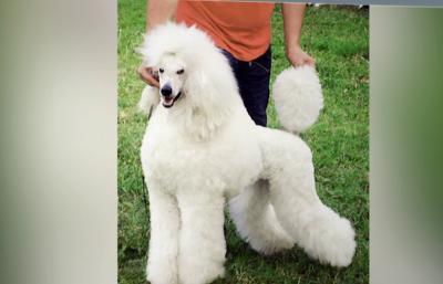Какво представлява груумингът за кучета?