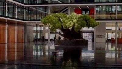 Маслиновото дърво
