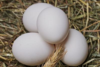 Сбиране на яйца - 30.01.2021