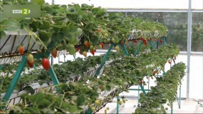 Българи създадоха интелигентна технология за прецизно земеделие