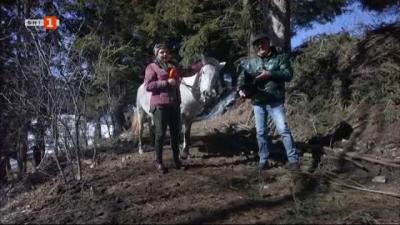 Конна езда в снежни условия