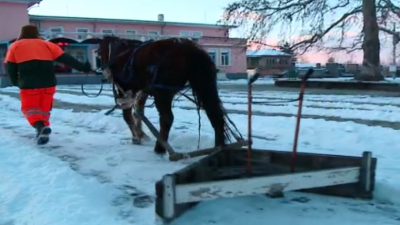 Horse-drawn snow plough: Veska clears pavements in the village of Momino Selo in an hour and a half