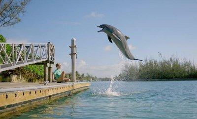 Отплатата на делфина