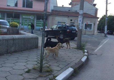 Доброволци изграждат със собствени средства приют за бездомни кучета в Първомай