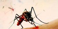 снимка 4 Комари