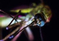 снимка 2 Комари
