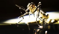 снимка 3 Комари
