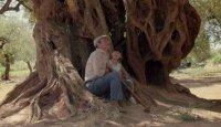 снимка 1 Маслиновото дърво