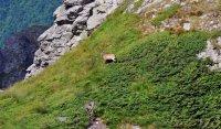 снимка 6 Един ден под връх Триглав