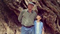 снимка 20 Маслиновото дърво