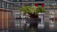 снимка 7 Маслиновото дърво