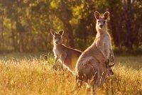 снимка 3 Чудото на торбестите бозайници