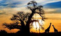 снимка 5 Южна Африка отблизо