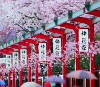 снимка 11 Япония отблизо