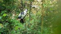 снимка 3 Гигантски панди, родени да бъдат диви
